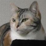 サラ近影2.jpg